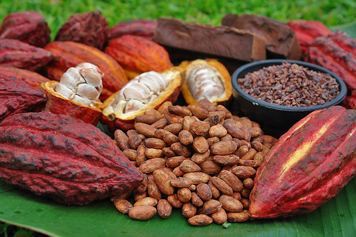 photo of cacao fruit, nibs & beans