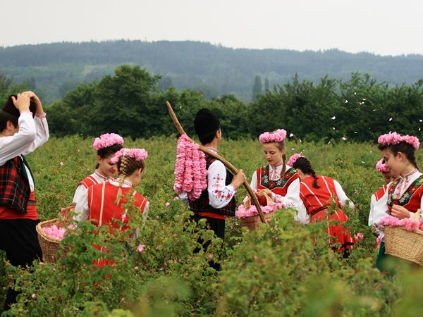 bulgarians gather roses in the Alteya fields