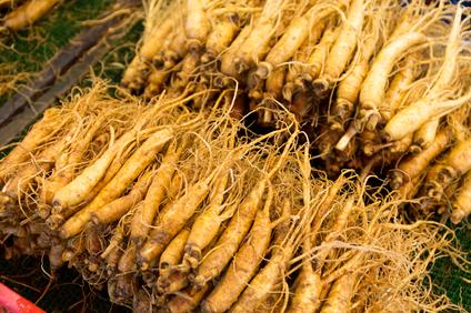 fresh ginseng suma root at a market